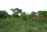 30.09 Hectares of Farm Land, Dobi Farm Land Layout, Gwagwalada, Abuja, Commercial Property for Sale