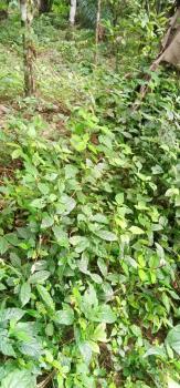 3 Plots of Land, Alabameta, Awule Off Futa West Gate, Akure, Ondo, Residential Land for Sale
