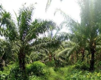 10 Plots of Mixed Use Land, Akanu, Ugwunagbo, Abia, Mixed-use Land for Sale