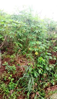 17 Plots of Land, Umuogo Ubakala,, Umuahia, Abia, Mixed-use Land for Sale