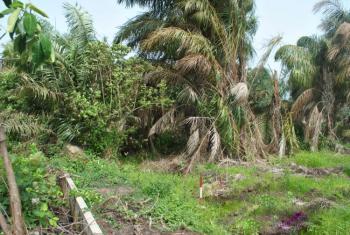 Bare Land Measuring Approx. 650 Square Metres, Lekki Phase 2, Lekki, Lagos, Residential Land for Sale
