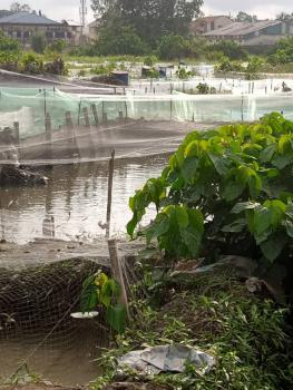 Fish Pond, Ufuoma Street, Warri, Delta, Mixed-use Land for Sale