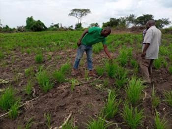 Acres of Farmland at Very Cheap Prices., Ogbaagba in Iwo Awo Road, Osogbo, Osun, Mixed-use Land for Sale