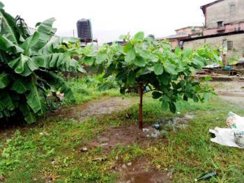 Standard Full Plot of Land, Phase 2, Gra, Magodo, Lagos, Residential Land for Sale