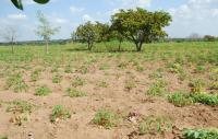 35 Hectares Of Land At Eyenkorin, Ilorin, Kwara State, Ilorin West, Kwara, Commercial Land for Sale