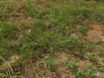 600sqm Bare Land, Osborne Phase 1, Osborne, Ikoyi, Lagos, Mixed-use Land for Sale