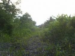 2 Plots of Land., Agric at The Back of Kwara Agro Mall, Ilorin East, Kwara, Mixed-use Land for Sale
