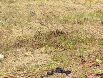 Plot of Land Measuring 600sqm, Off Adeniran Ogunsanya, Surulere, Lagos, Mixed-use Land for Sale