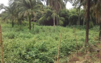 Bare Land at a Nice Location, Umueziala Umudim, Ehime Mbano, Imo, Residential Land for Sale