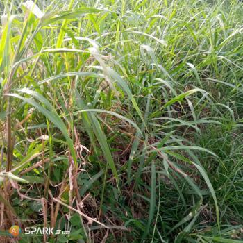 Land, Close to Futo, Ihiagwa, Owerri Municipal, Imo, Mixed-use Land for Sale