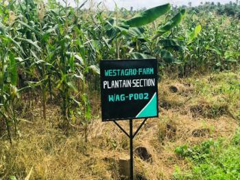 Farm Land, Remo North, Ogun, Commercial Land for Sale