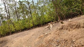 2665 Sqm Residential Plot of Land C of O, Opposite Citec Estate, Jabi, Abuja, Residential Land for Sale