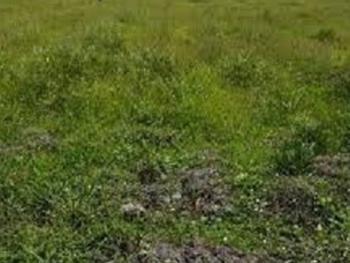 1,200 Sqm of Land, Shoreline Estate, Ikoyi, Lagos, Land for Sale
