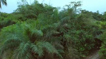 Dry Virgin Land for Farming, Lekki Free Trade Zone, Lekki, Lagos, Industrial Land for Sale
