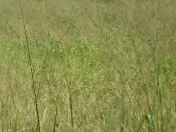 2,750sqm Bare Land, Adeniyi Jones, Ikeja, Lagos, Mixed-use Land for Sale