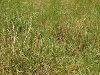 Land Measuring 746sqm, Pinnock Beach Estate, Lekki, Lagos, Mixed-use Land for Sale