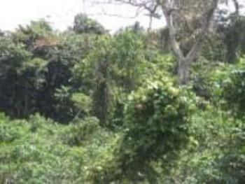 167,478 Acres of Land, Ipokia-owode, Ipokia, Ogun, Mixed-use Land for Sale