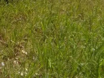 Plots Measuring 1,800sqm, Lekki Phase 1, Lekki, Lagos, Mixed-use Land for Sale