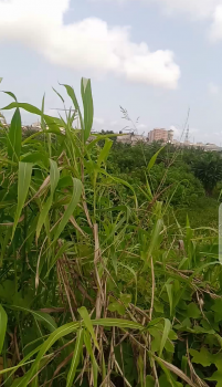 Fenced and Gated 12 Acres of Land with C of O, Abule Ado, Opposite Tradefair, Abule-ado, Amuwo Odofin, Lagos, Land for Sale