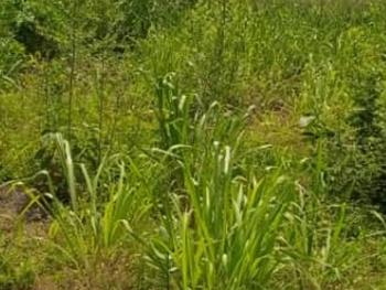 Land Measuring 3,700sqm, Jibowu, Yaba, Lagos, Mixed-use Land for Sale