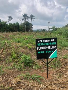 Blossoming Farm Land, Remo North, Ogun, Commercial Land for Sale
