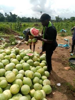 Cheapest Farm Land, Remo North, Ogun, Tank Farm for Sale