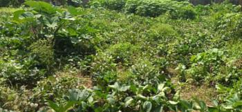 1000sqm Well-located Residential Land in an Estate, Osapa-jakande, Lekki, Lagos, Land for Sale