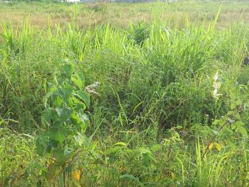54 Plots of Land (9 Acres), Ogombo Road, Off Abraham Adesanya Estate Roundabout, Ajah, Lagos, Residential Land Joint Venture