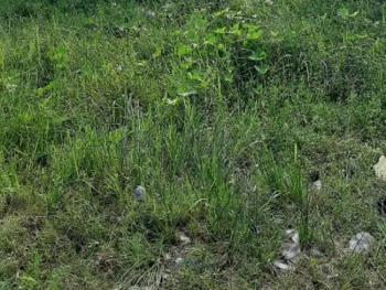 Fenced Land Measuring 844sqm, Gra Phase 2, Magodo, Lagos, Residential Land for Sale