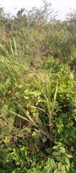 11,700sqm Land with Lasg C of O, Gerald Road, Ikoyi, Lagos, Mixed-use Land for Sale