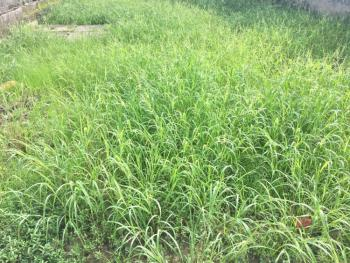 848.2 Sqm Governors Consent Plot, in an Estate, Olokonla, Ajah, Lagos, Land for Sale